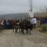 Umkhosi wokukhahlela - Bhaca Royal Reed ceremony - Elundzini Royal Residence, KwaBhaca (19) - Bhaca Maidens