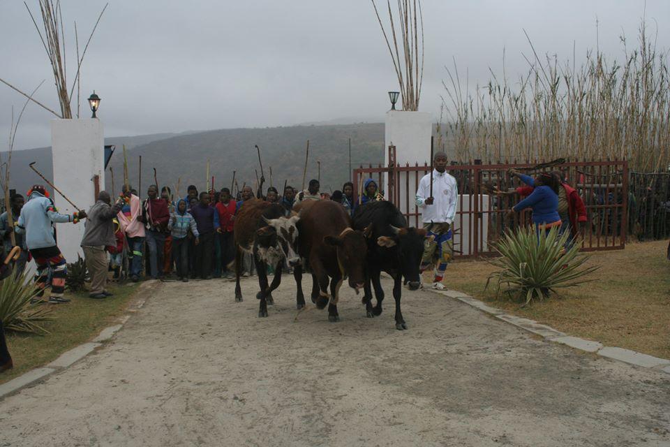 Umkhosi wokukhahlela – Bhaca Royal Reed ceremony – Elundzini Royal Residence, KwaBhaca (19) – Bhaca Maidens