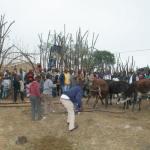 Umkhosi wokukhahlela - Bhaca Royal Reed ceremony - Elundzini Royal Residence, KwaBhaca (2) - Bhaca Maidens
